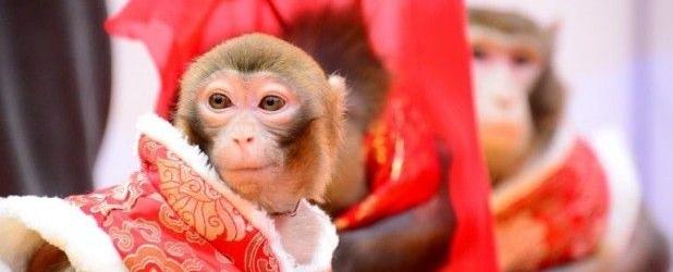 Mono de Fuego. Sapiens amicus…