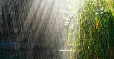 Yuyan | A mal tiempo, buen TaiChi