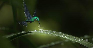 colibri yuyan terrassa