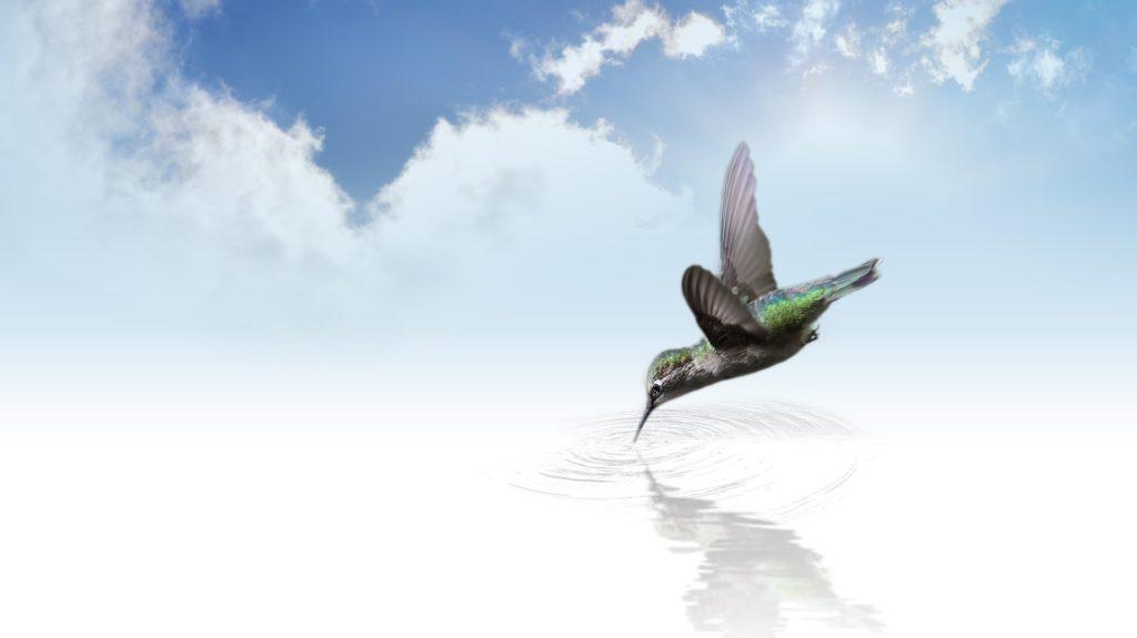 hummingbird 736890 1920