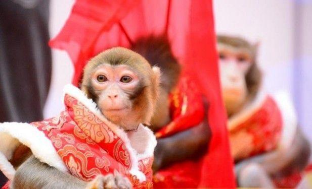 monkey 618x376