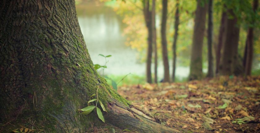 tree trunk 569275