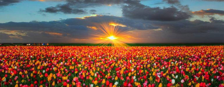 yuyan flores gigong